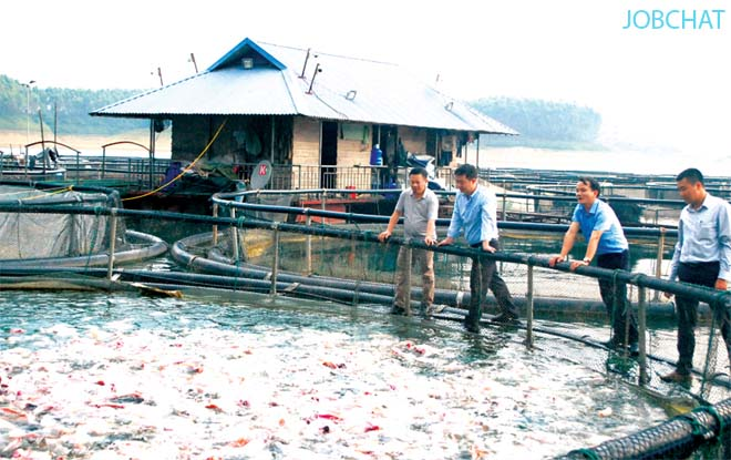 Mô hình khởi nghiệp nuôi thả cá