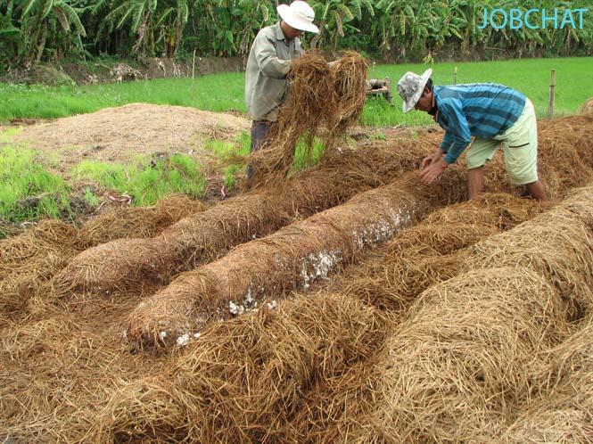 Mô hình trồng nấm rơm