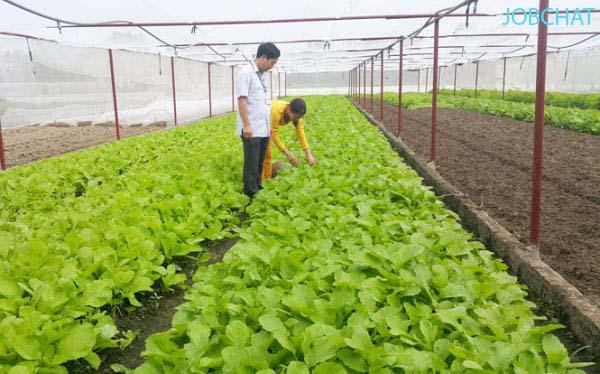 khởi nghiệp bằng mô hình trồng rau sạch ở nông thôn